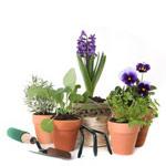 Aidance, services à la personne : jardinage